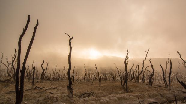 barren field with dead plants