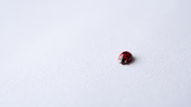 a ladybug on a white background